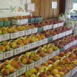 Farm Market Peaches