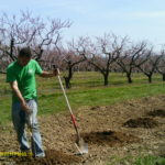 Bauman Orchards - Orchard Photo