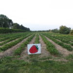 Bauman Orchards Strawberry Festival