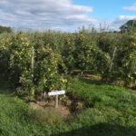 Bauman Orchards - Scenic Ridge