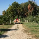 Bauman Orchards - Fall Festival